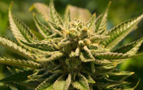 Legalizing Marijuana in Illinois: Guaranteed to Succeed?