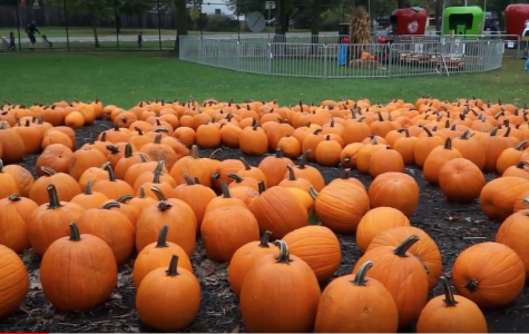 A look at the top local Halloween attractions