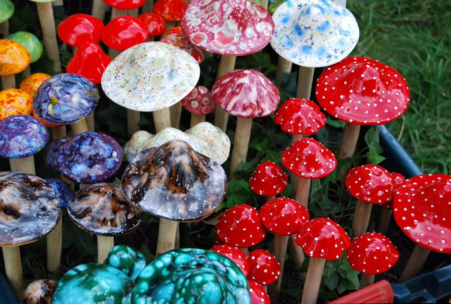 First, marijuana. Are magic mushrooms next?