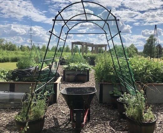 COD's Fuel Garden, pictured above. Courtesy of Ana Vitek, Fuel Garden manager.