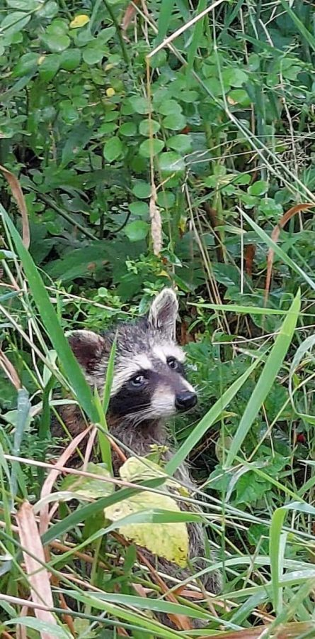 Pandemic leads to wildlife rescue boom.